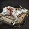 Sacrifice_animals.png
