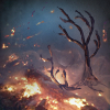 Выжженная земля