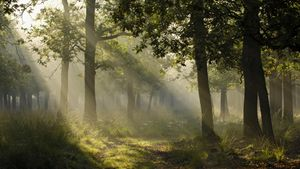 Shafts-of-light-in-forest.jpg