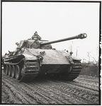 PantherMarch.jpg